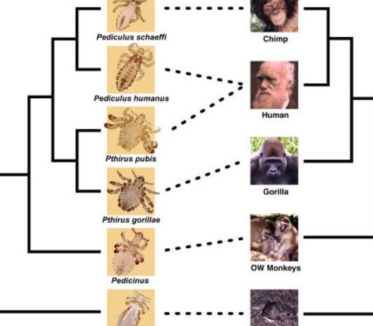 les différentes espèces de pou